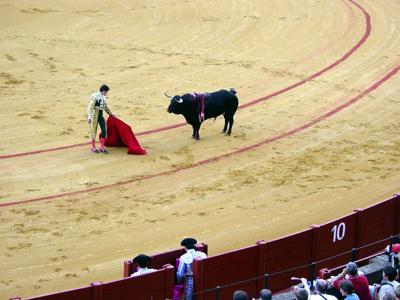 Bullfight picture 1
